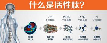 小分子活性肽(低聚肽)